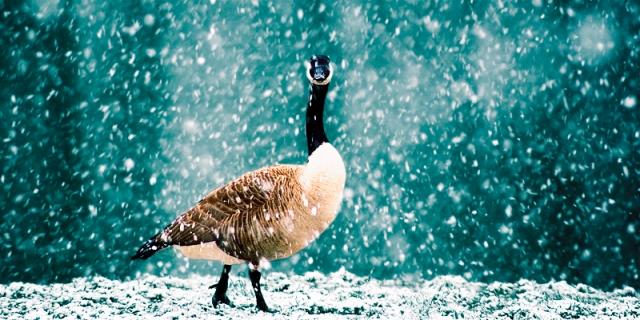 20060405173421_snow-bird