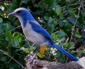 Florida_Bird1