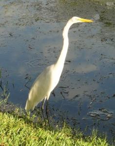 bird 001 (2)