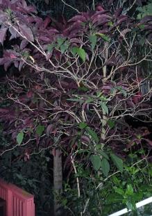 Bloom Tree 003