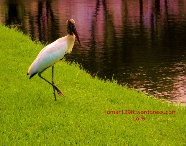 FL Birds