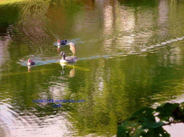 Racing Ducks2