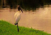 FL Bird