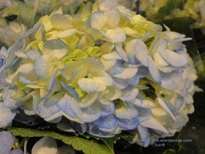 Blue-Beige Shades