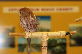 Owl Sideways