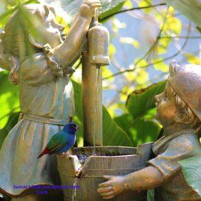 Tricolor Parrot Finch