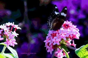 Vibrant Swallowtail