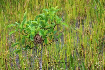 Empty Tree Nest