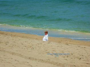 Sand Hurdle