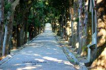 Walkway between the trees...