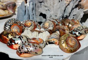 Shells and Rock