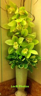 Lime Orchids