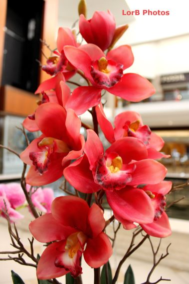 Pinkish Orchids