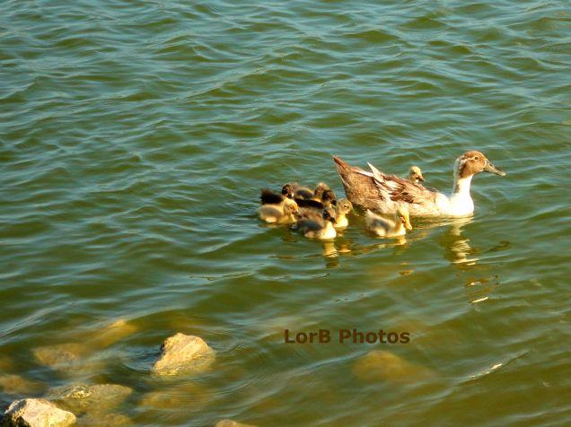 Duckies...