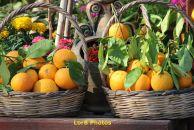 Look like lemons