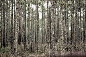 Walk through nature Black White