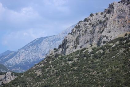 Delphi big 004
