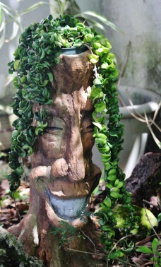 Tropical Plant 034