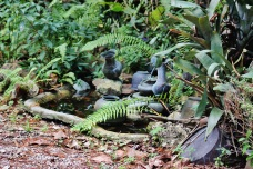 Tropical Plant 042