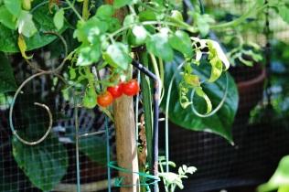 Tropical Plant 052