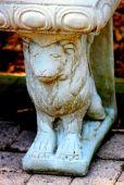 Lions Face fm a Bench