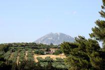 Olive Trees-Crete