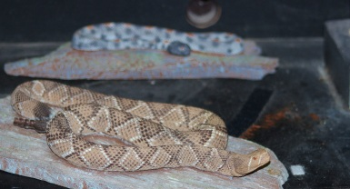 Snake (2)