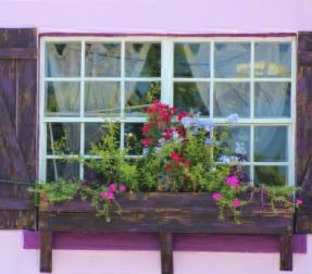Window Purple